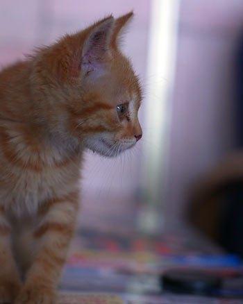 Этого кота нам прислал киевлянин Артем