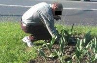 У Рівному патрульні змусили чоловіка посадити назад вирвані на клумбі квіти
