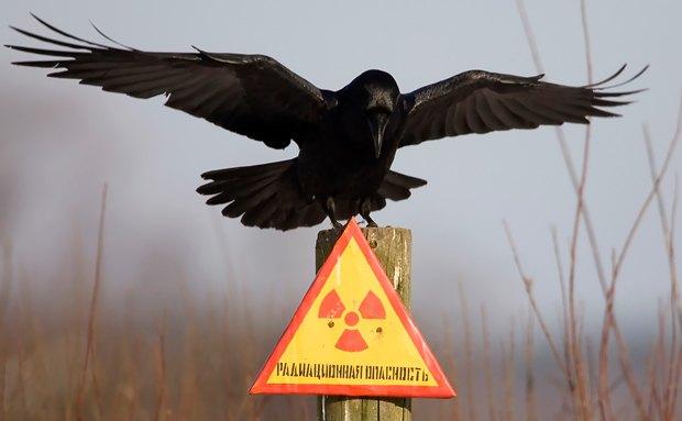 Кадр из фильма <<Ядерные отходы>>