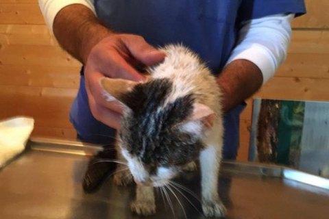 ВИталии спасли кошку, прожившую 5 дней под завалами