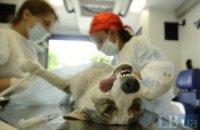 У Києві почали стерилізувати бездомних собак