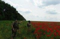 В Харьковской области нашли плантацию мака площадью 120 га