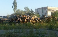 Пять гослесхозов Буковины попались на нелегальном экспорте древесины