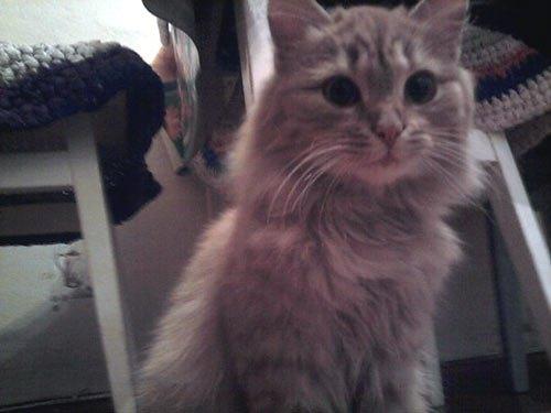 Кошка Пушинка от читательницы Людмилы