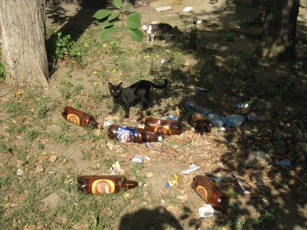 г. Николаев, Корабелов, 18 А. Перед самим входом в дом, в груде хаоса пивных бутылок, гостей встречает черная кошка