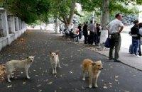 Азаров велел решить проблему бездомных животных