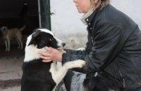 Безпритульних собак в Ірпені вакцинують, стерилізують і шукають для них домівки