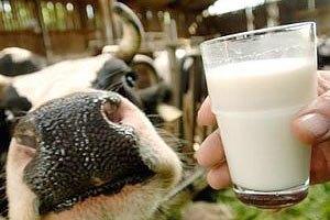 Аграрний фонд почав боротися з дешевим молоком