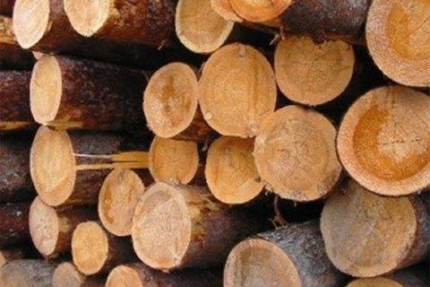 Депутаты БПП обвинили мэров Бучи и Ирпеня в расхищении леса под Киевом