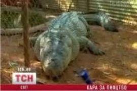 Пьяный австралиец оседлал 5-метрового аллегатора