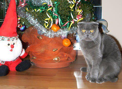 Читательница Настя Обертинская прислала нам фото кошки Мурки