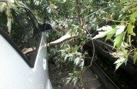 В центре Киева дерево упало на пять припаркованных автомобилей