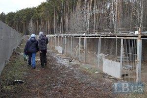 """""""Приют для животных"""" в Бородянке прекратил существование"""