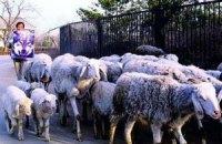 Украина ограничила ввоз скота из ЕС из-за неизвестного заболевания