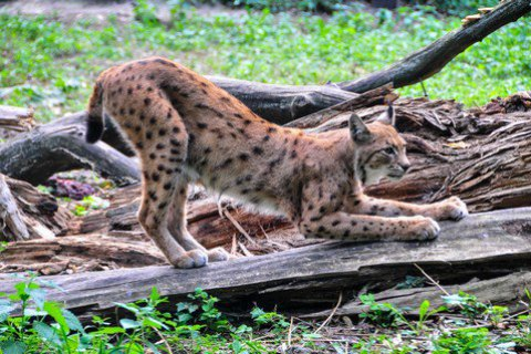 Киевский зверинец стал кандидатом вЕвропейскую ассоциацию зоопарков иаквариумов