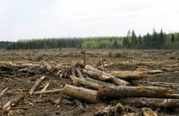 В Чопе поймали пограничников на контрабанде леса