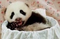 Пятничная панда #158