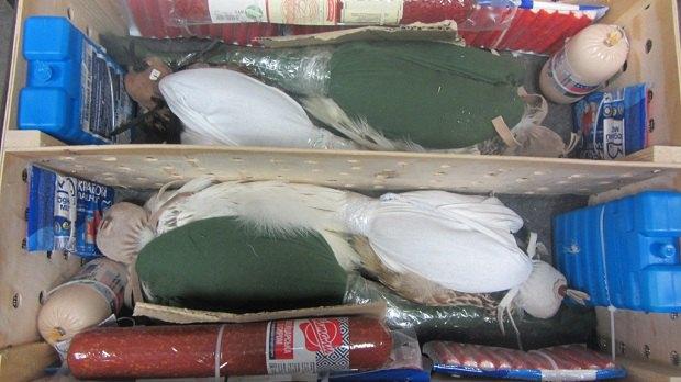 Таможенники обнаружили четырех соколов среди багажа ваэропорту «Борисполь»