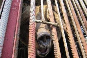 Еще одного медведя спасли от жестокого обращения