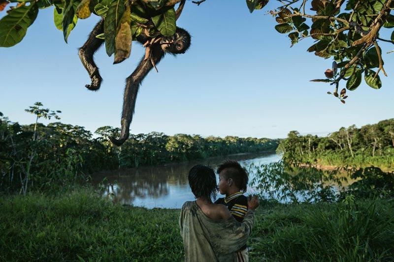 Коренные народы Перу охотятся и занимаются фермерством в лесу Ману в Перу, чтобы обеспечить себя едой. При этом живущие в лесу паукообразные обезьяны нередко становятся как добычей охотников, так и их домашним любимцем.