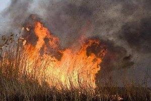 Пожар нанес Дунайскому заповеднику 9 млн гривен убытков
