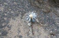 Двое грибников подорвались на мине в Луганской области