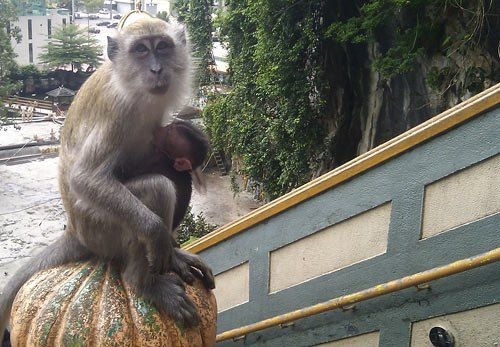 Фото обезьянок нам прислала читательница Мария