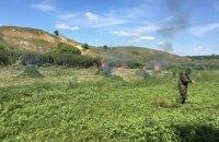 Правоохранители уничтожили более 50 тыс. кустов конопли в зоне АТО