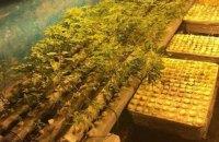 Житель Днепра вырастил в гараже конопли на 2,2 млн гривен