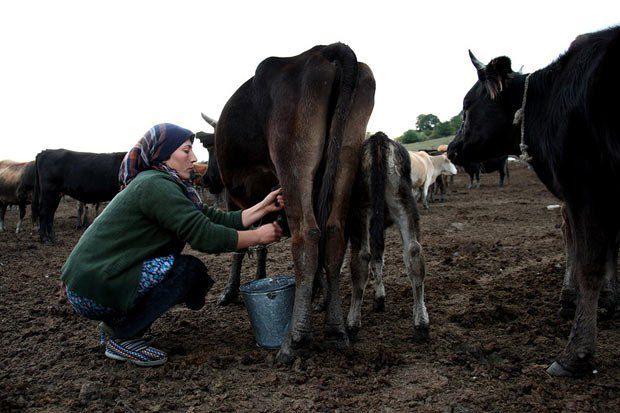 Слишком много грузин заняты в сельском хозяйстве