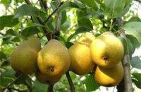 Ученые назвали лучший фрукт для офисных работников