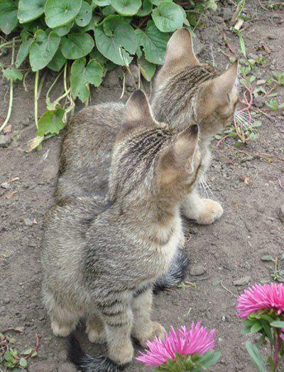 Котики и кролик читательницы Юлии Т.
