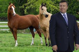 Польша подарила Януковичу двух гуцульских лошадей