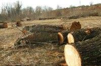 Киевская прокуратура запретила строительство возле Быковнянского леса