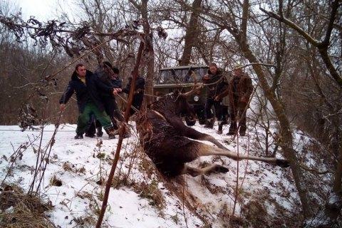Спасатели вХарьковской области спасли лося изледяной воды