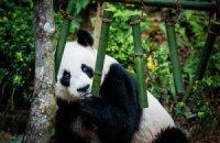 Пятничная панда #157