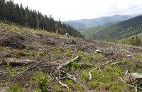 По делу о незаконной вырубке леса арестованы четверо офицеров Чопского погранотряда