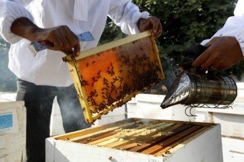 Бджоли на експорт