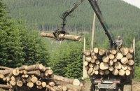 Європейці хочуть наш ліс? Хай самі приїжджають