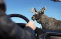 В Житомирской области лось стал причиной тройного смертельного ДТП