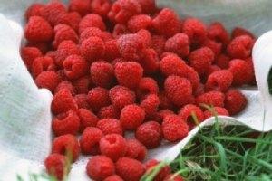 Закупку малины для чиновников по 670 гривен опровергли