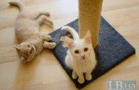 Домашний приют для кошек в Киевской области нуждается в помощи (ОБНОВЛЕНО)