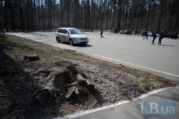 Эту площадку посреди леса заасфальтировали якобы к дню рождения Януковича