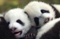 П'ятнична панда #85