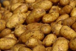 Азаров: картофеля собрано в два раза больше, чем требуется