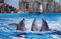 """Одесский дельфинарий """"Немо"""" остался без земли"""