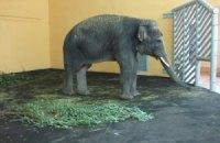 У Київський зоопарк привезли слоненя