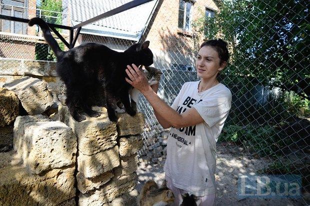 Домашній притулок для кішок у Київській області потребує допомоги (фото)