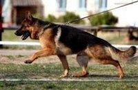 Верховна Рада має намір збільшити штрафи за вигулювання собак