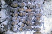 У Житомирській області знайшли схованки з гранатами